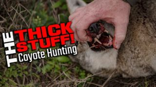 The Thick Stuff! – Coyote Hunting