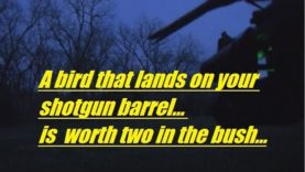 A bird that lands on your shotgun barrel… is  worth two in the bush…