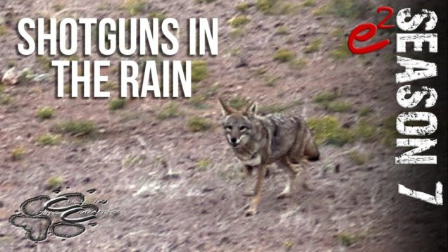 COYOTE HUNTING | S7 E2 Rainy Shotgun Coyotes