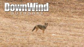 Eastern Coyote Hunting:  Look In His Eye (DownWind Outdoors)