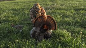 Aggressive Kentucky Gobbler