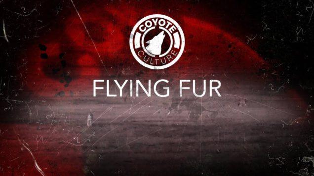 "coyote Hunting, 3 Coyotes:  C.C. Season 3 E3 ""Flying Fur"""