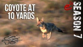 COYOTE HUNTING | S7 E4 Coyotes at Close Range