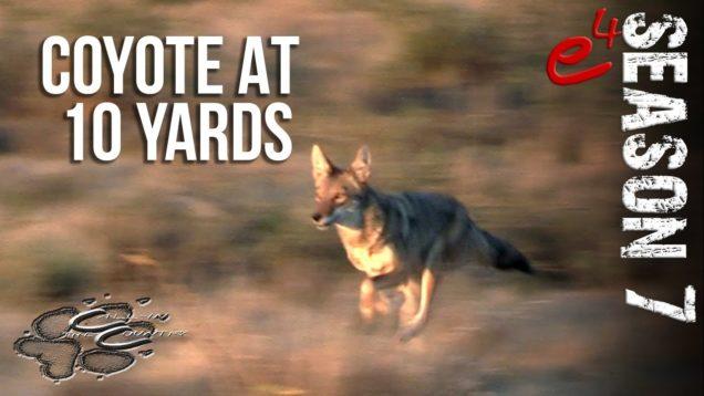 COYOTE HUNTING   S7 E4 Coyotes at Close Range