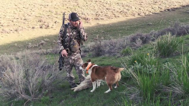 Coyote Hunting – Spring Time Coyote Calling – Coyote Assassins S2:E3