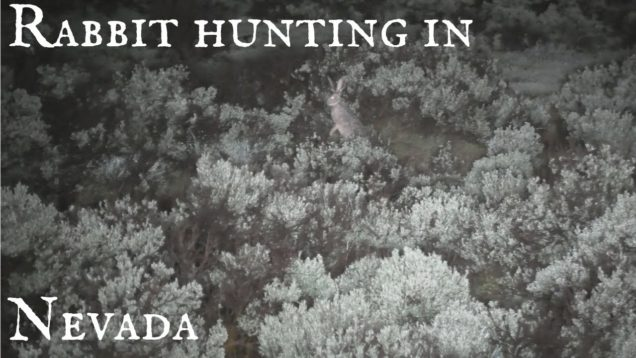 Rabbit hunting in Nevada – Coyote Hunting