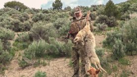 Colorado Coyote Management