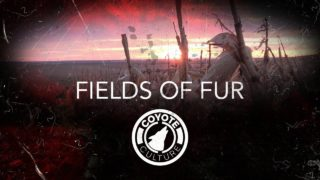 "Coyote Hunting, 2 Coyotes:  C.C. Season 3 E9 ""Fields of Fur"""
