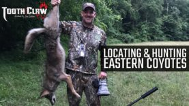 Locating and Hunting Eastern Coyotes