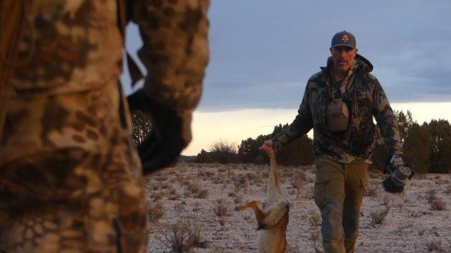 Vole Squeaks fool Coyote