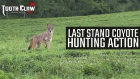 Last Stand Coyote Hunting Action