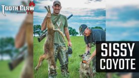 Sissy Coyote – Coyote Hunting