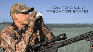 The Basics of a Coyote Stand