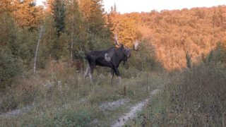 OMM Outfitter Moose Hunt