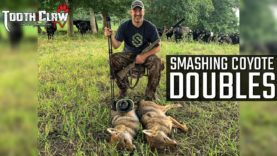 Smashing Coyote Doubles – Coyote Hunting