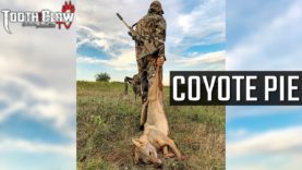 Coyote Pie – Coyote Hunting