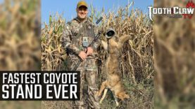 Fastest Coyote Stand Ever – Coyote Hunting