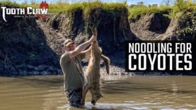 Noodling For Coyotes – Coyote Hunting