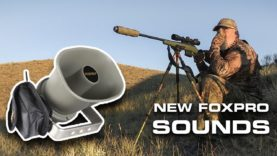 Success with the New FOXPRO Sounds