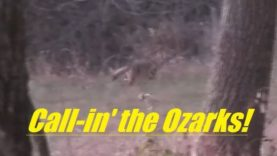 Coyote hunting in the Ozarks of Missouri, SOLO, number 43…