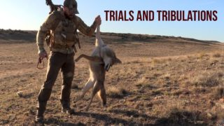 COYOTE HUNTING – Trials and Tribulations