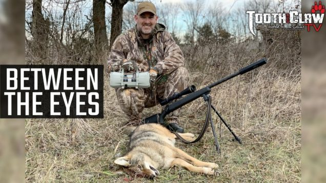 Between The Eyes – Coyote Hunting