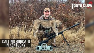 Calling Bobcats In Kentucky – Bobcat Hunting