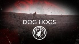 "Coyote Hunting, 2 Coyotes: C.C. Season 4 E3 ""Dog Hogs"""