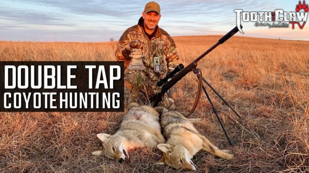 Double Tap – Coyote Hunting