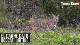 El Carne Gato – Bobcat Hunting