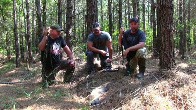 Hunting Mid-Day Coyotes S8:E30