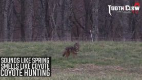 Sounds Like Spring Smells Like Coyote – Coyote Hunting