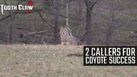 2 Callers for Coyote Success – Coyote Hunting