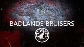 "Coyote Hunting, 4 Coyotes: C.C. Season 4 E4 ""Badlands Bruisers"""