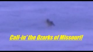 Coyote hunting in the Ozarks of Missouri, SOLO, number 46….