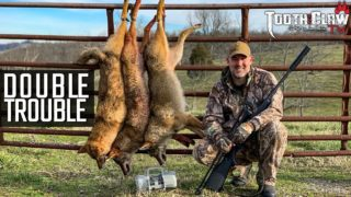 Double Trouble – Coyote Hunting