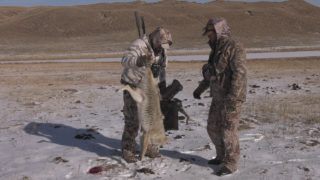 Late Season Coyotes
