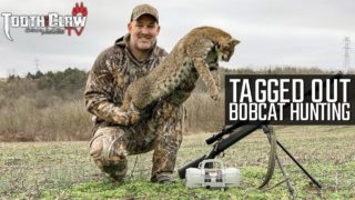 Tagged Out – Bobcat Hunting