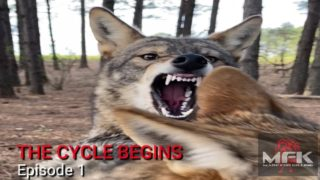 All About COYOTES! The Cycle Of LIFE & DEATH Begins! Episode1