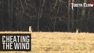 Cheating The Wind – Coyote Hunting