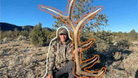 GIANT SIX POINT BROWN ELK SHED!