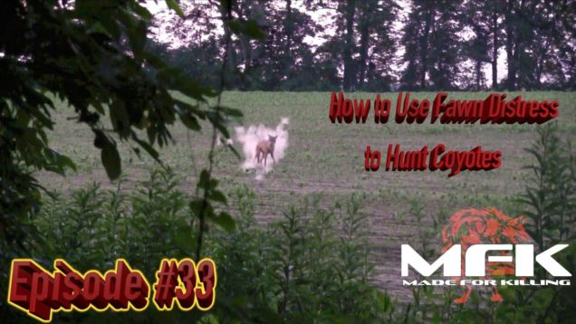 How to Use Fawn Distress to HUNT COYOTES in Illinois S8:E33