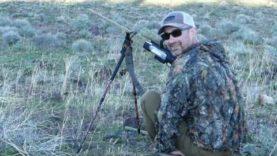 x4 Coyotes Respond Coyote Calls