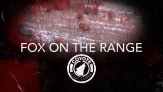 "Coyote Hunting, Fox & Coyote: C.C. Season 4 E12 ""Fox On The Range"""