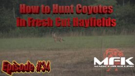 How to Hunt Coyotes in Fresh Cut Hayfields in Tennessee S8:E34