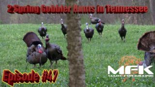 Two Exciting Spring Gobbler Hunts using Decoys in Tennessee