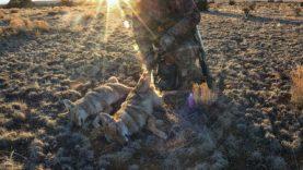 Blood on the X2S | Arizona Coyote Double