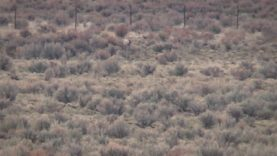 Coyote Hunting – SUPPRESSED – Spring Hunt 2020