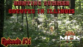 Hunting Summer Coyotes in Illinois S8:E36